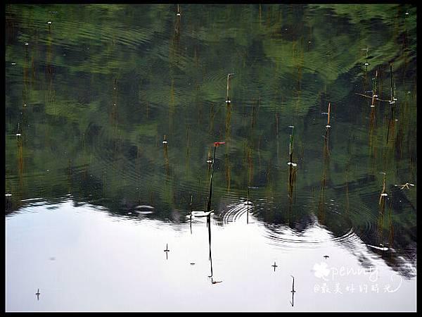 PDSC_0220夢湖12.jpg