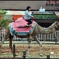 愛寶樂園05539