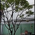 SAM_5435小洋房25.jpg