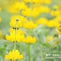 魯冰花19.jpg