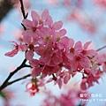 魯冰花24.jpg