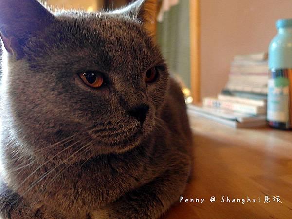 cat eyes11.jpg