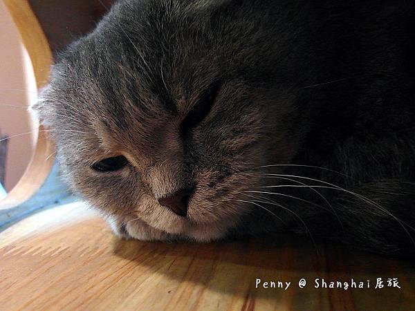 cat eyes22.jpg
