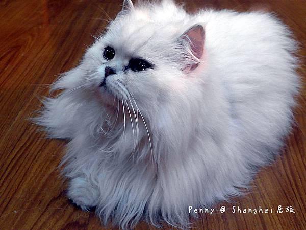 cat eyes25.jpg