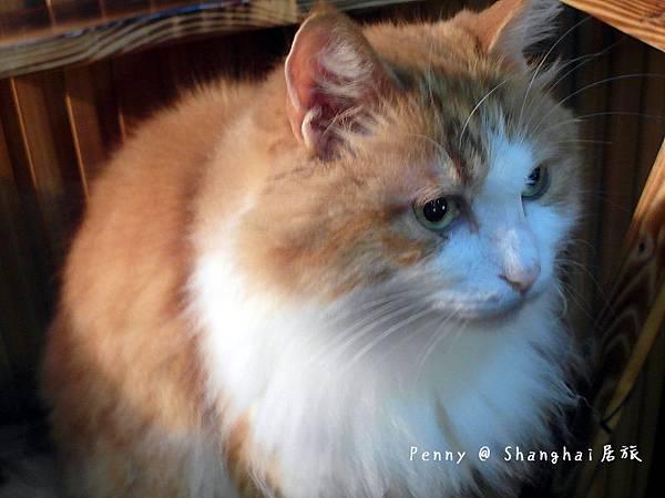 cat eyes26.jpg