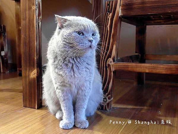 cat eyes28.jpg