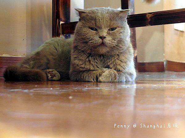 cat eyes41.jpg