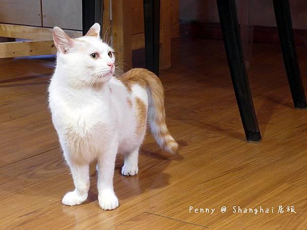 cat eyes44.jpg