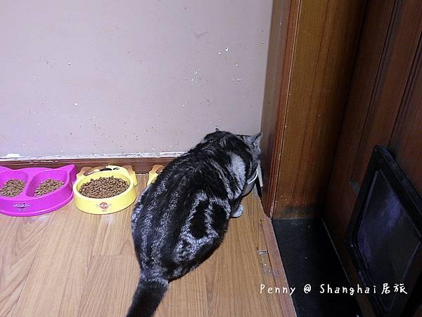 cat eyes47.jpg