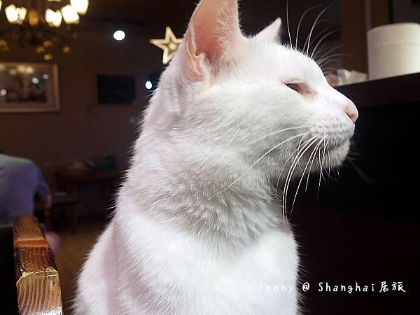 cat eyes49.jpg