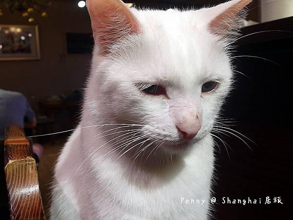 cat eyes50.jpg