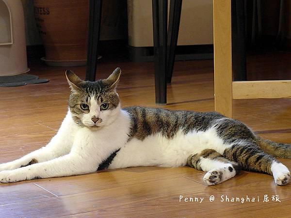 cat eyes56.jpg