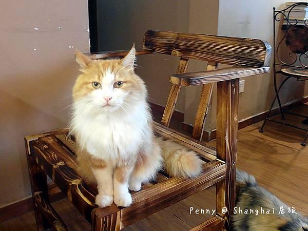 cat eyes62.jpg