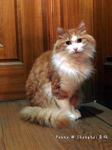 cat eyes71.jpg