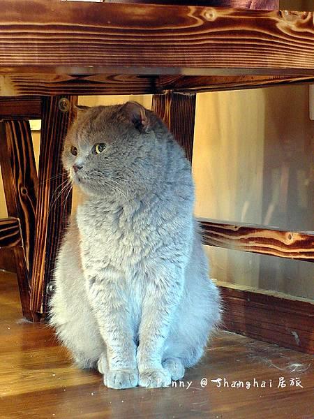 cat eyes73.jpg