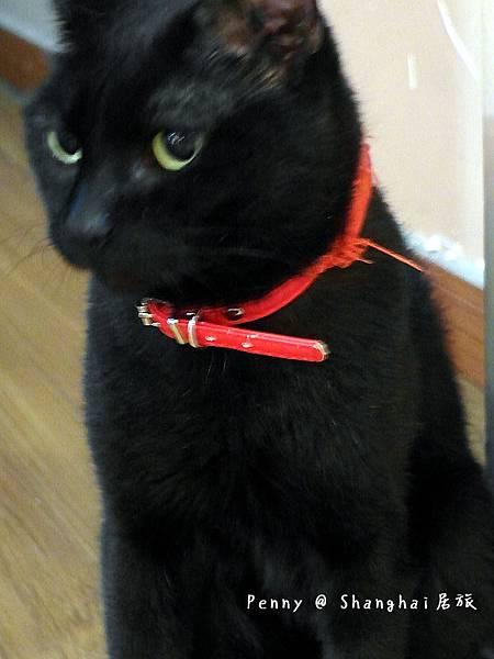 cat eyes74.jpg