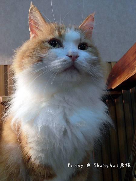 cat eyes75.jpg