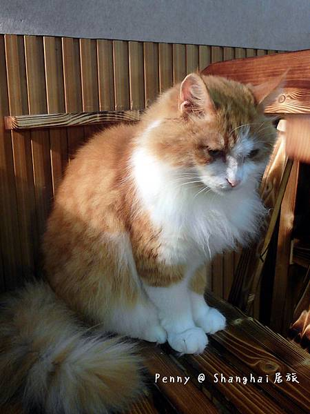 cat eyes76.jpg