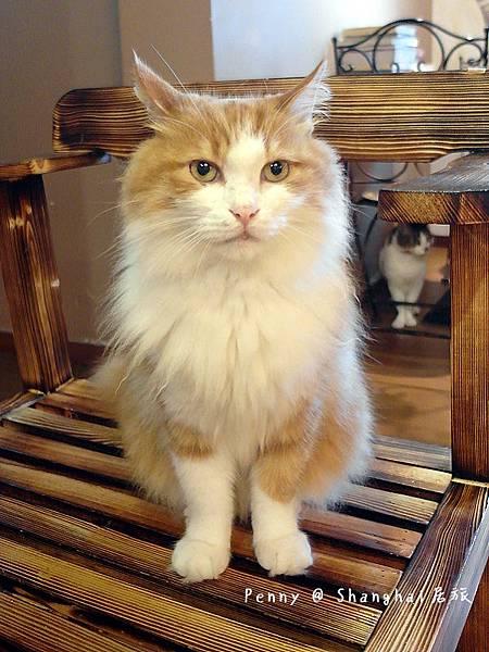 cat eyes81.jpg