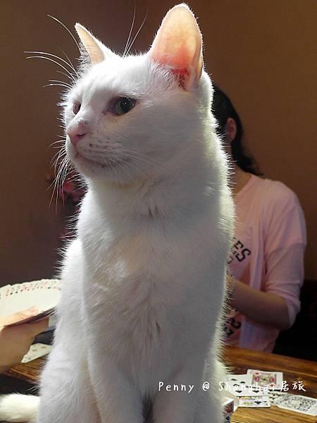 cat eyes83.jpg