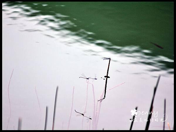 PDSC_0237夢湖15.jpg