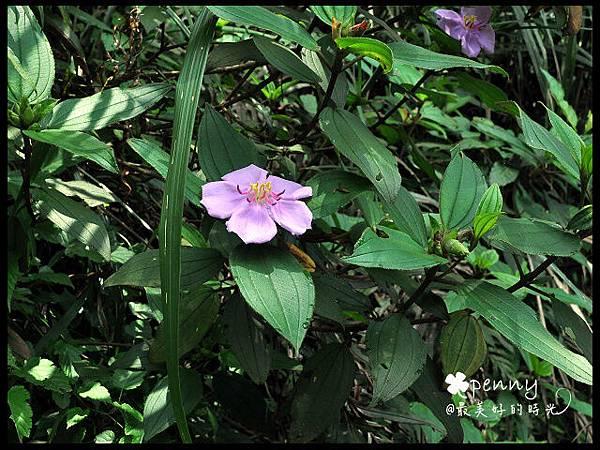 PDSC_0366夢湖44.jpg