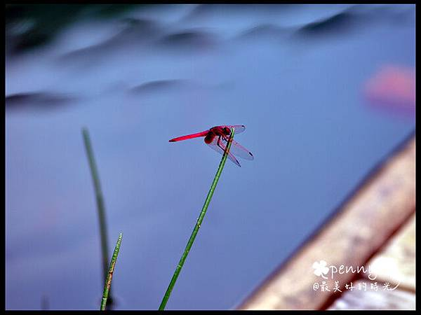 PDSC_0284夢湖26.jpg