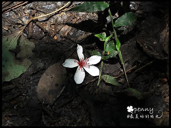 PDSC_0369夢湖45.jpg