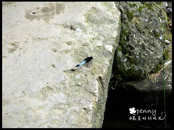 PDSC_0204夢湖9.jpg