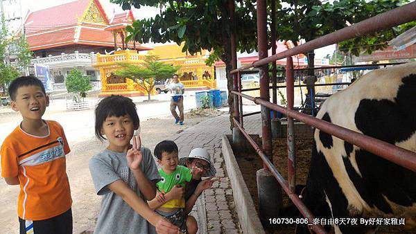 160805_1amphwa廟餵牛 (2).JPG