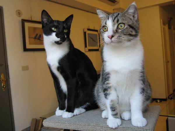 二貓帥氣合照