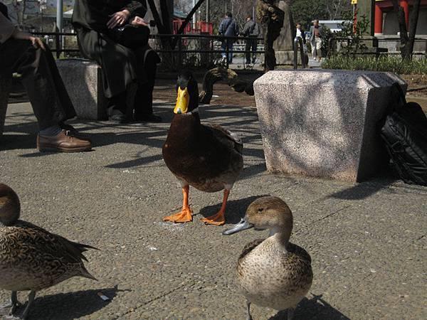 IMG_6087_上野鳥.jpg