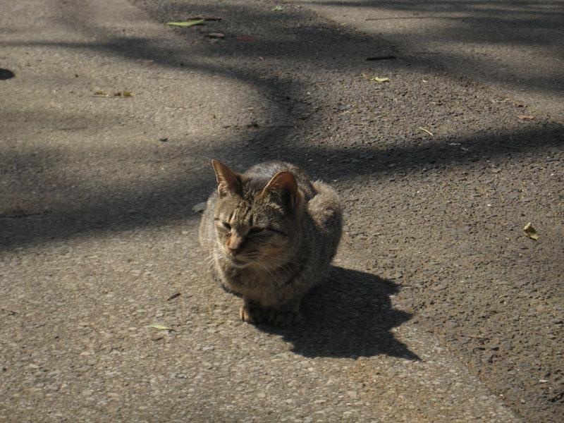 IMG_6090_上野貓.jpg