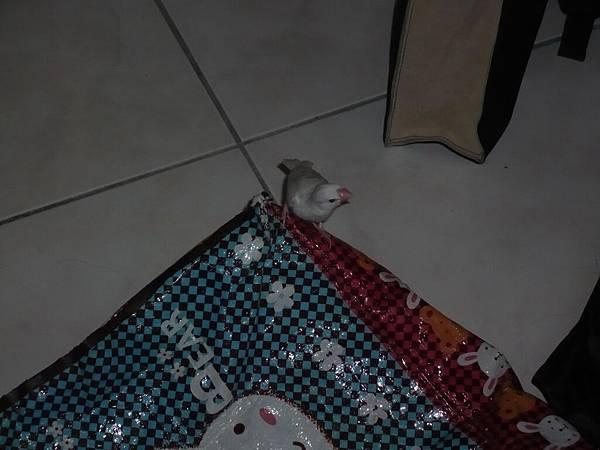 袋子是我的!