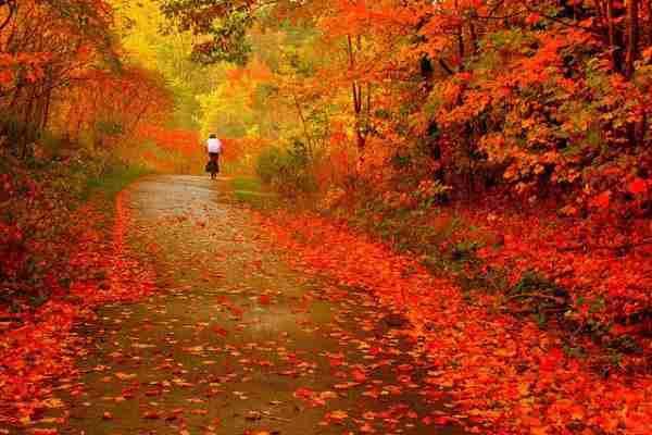 火紅楓采深秋蔓延,攝影家隨手一拍即美景