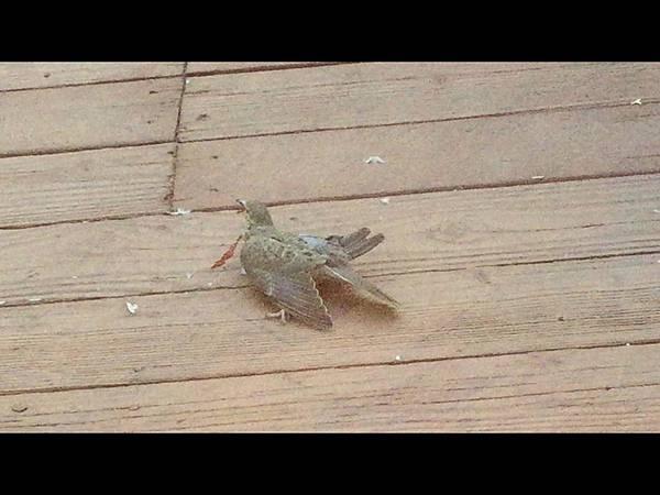 bird dying