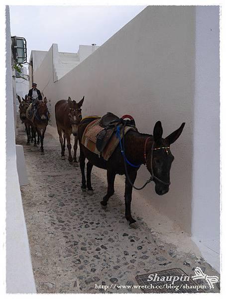 驢子要去上班了!!!