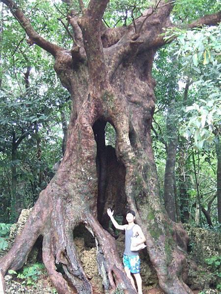 誰說會跟大樹一樣高?