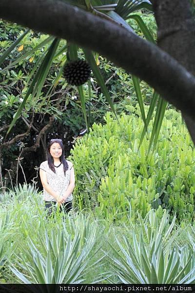 植物園 (18).JPG