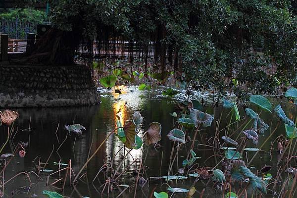 植物園 (21).JPG