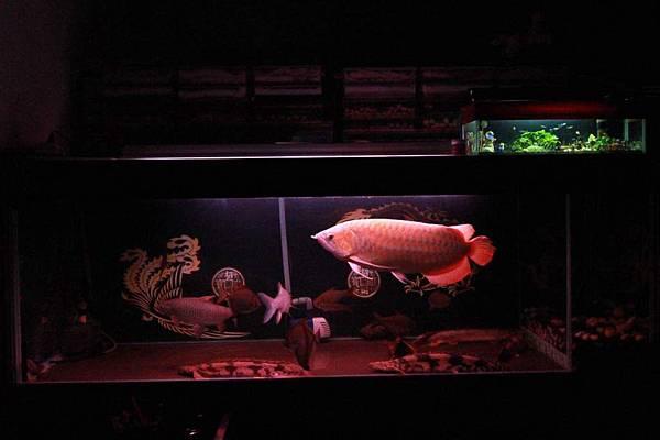 魚缸 (1).JPG