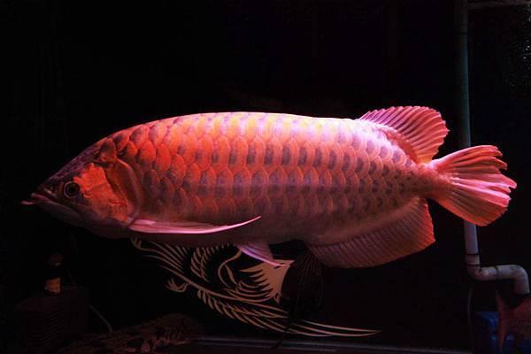 魚缸 (3).JPG
