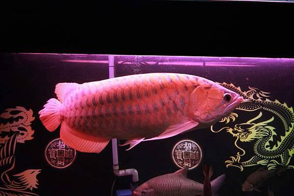 魚缸 (7).JPG