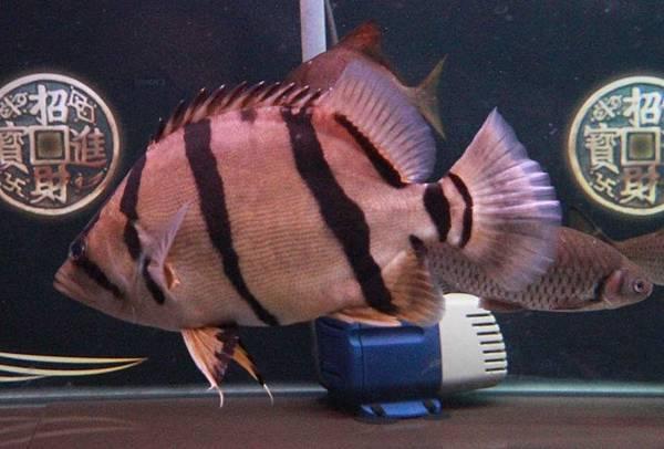 魚缸 (6).JPG