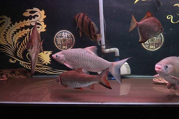 魚缸 (8).JPG