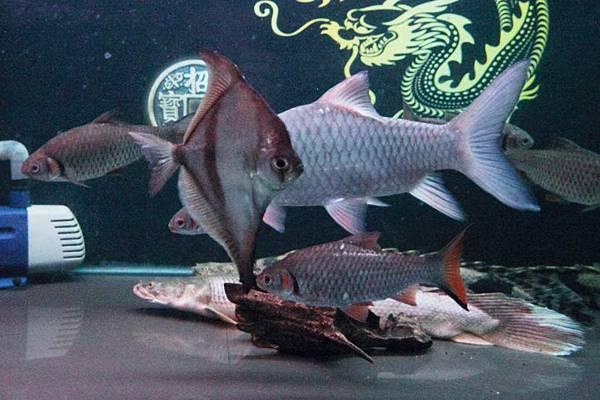 魚缸 (12).JPG