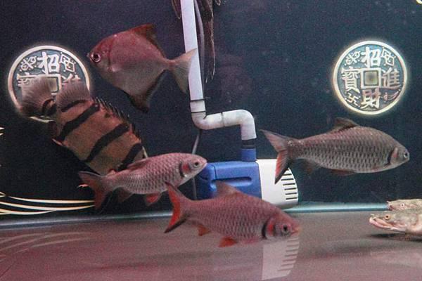 魚缸 (10).JPG