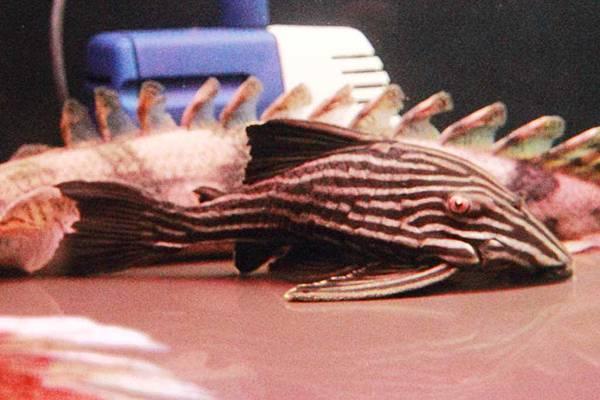 魚缸 (15).JPG