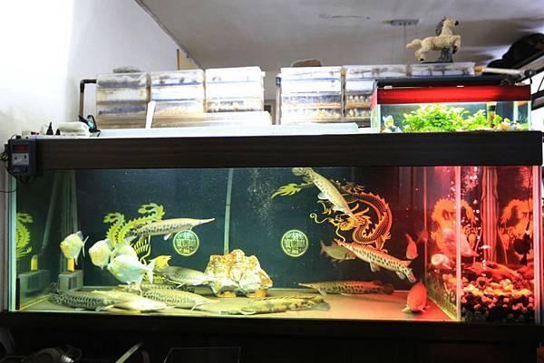 魚缸七呎_160601 (1).jpg