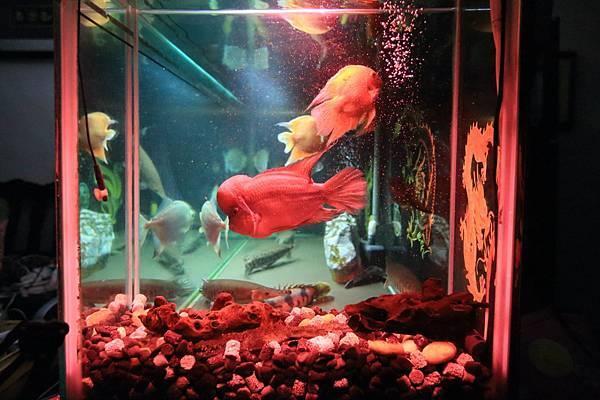 魚缸七呎_171118 (2)-N.JPG